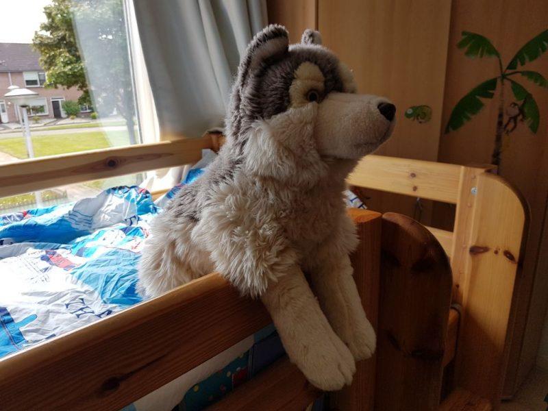 hond, knuffel, wolf, bewaken