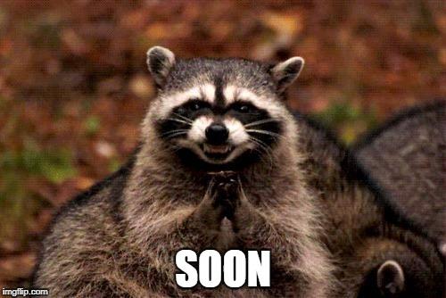 raccoon, soon, plotting